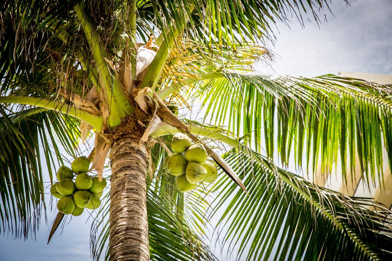 Peluang Bisnis Bagian Pohon Kelapa